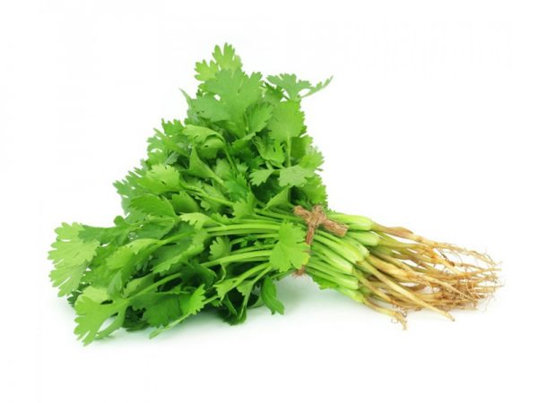 Coriander-Leaf-India-bazar-thundi